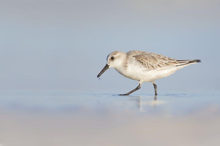 Refreshing sip - Bird & Wildlife Photography