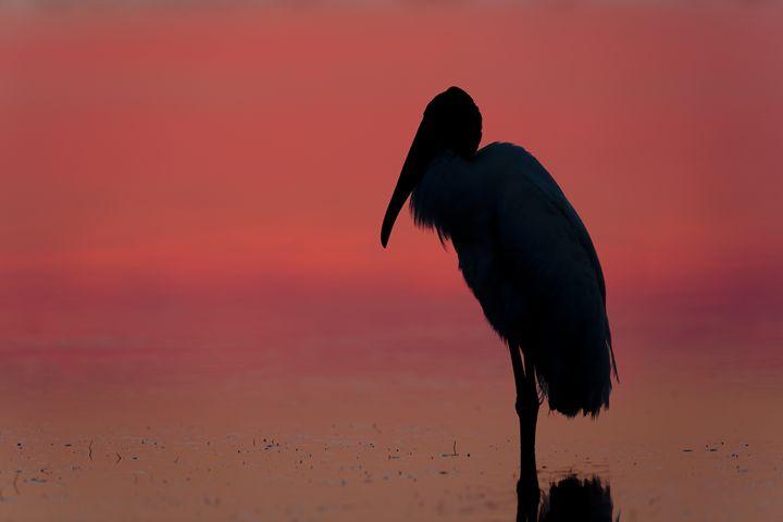 Sunrise reflection - Bird & Wildlife Photography