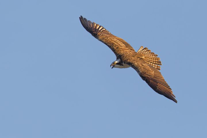 Danger from the sky - Bird & Wildlife Photography