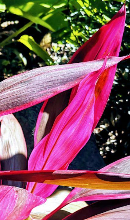 Pink Petal - MiaSoleil