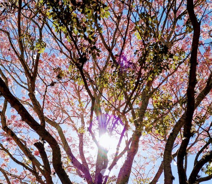 Florida Blossom - MiaSoleil