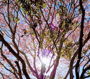 Florida Blossom