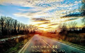Nature #4: Sunset Blvd.