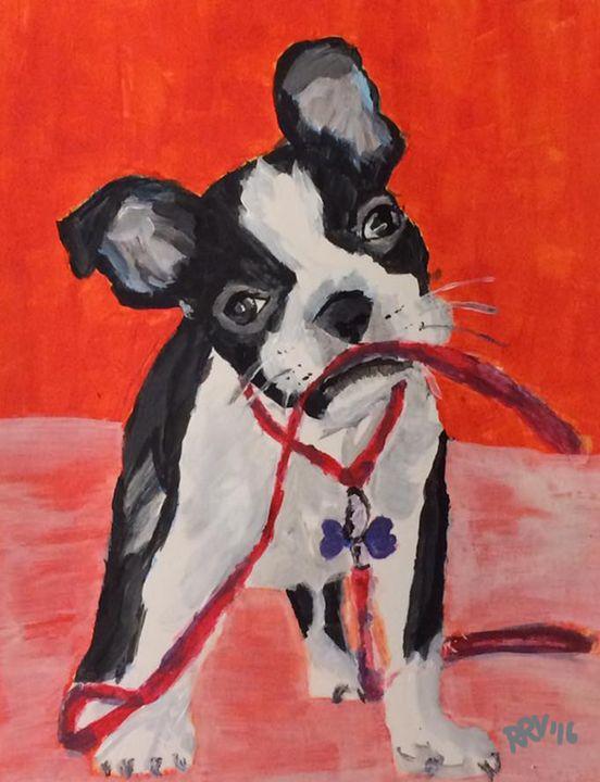 Boston Terrier - Randi Vaughan