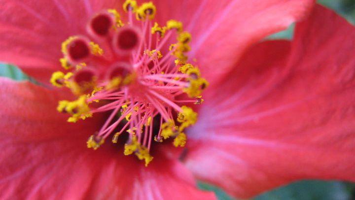 red flower - mauriciodelos