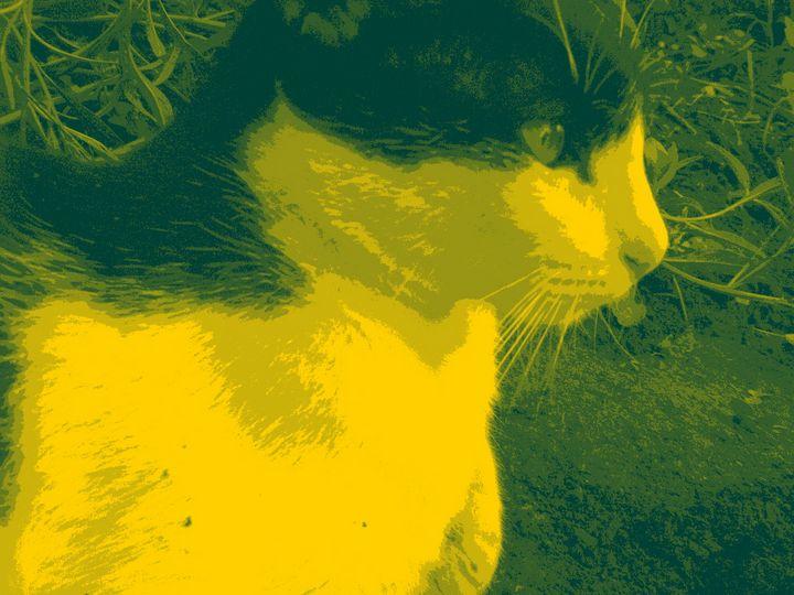 green cat - mauriciodelos