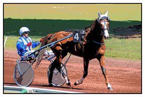 Horses - CORIOLAN