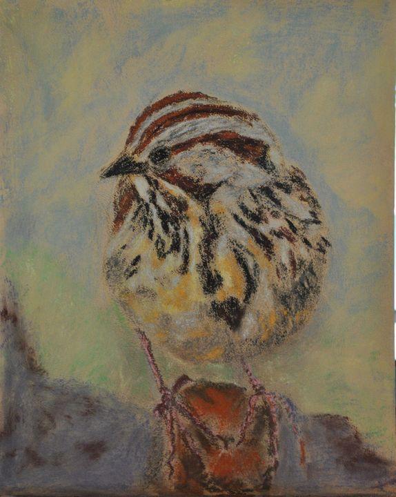 Lincoln's Sparrow - tammybrownart
