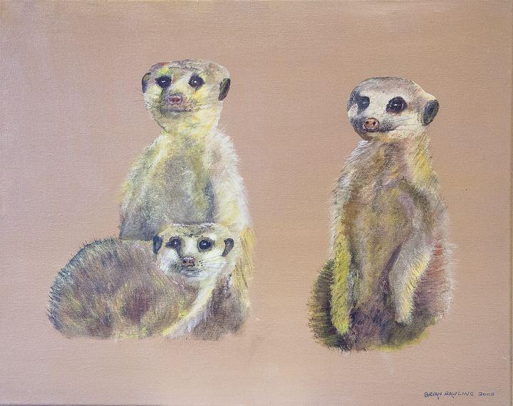 Meerkats - Creating Better Futures