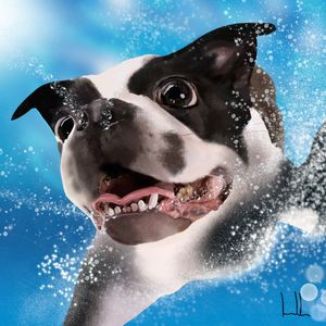 Billy swimming underwater - Artbeat