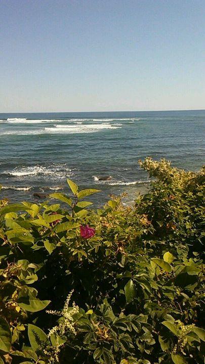 Ocean bloom -  Njnbyash