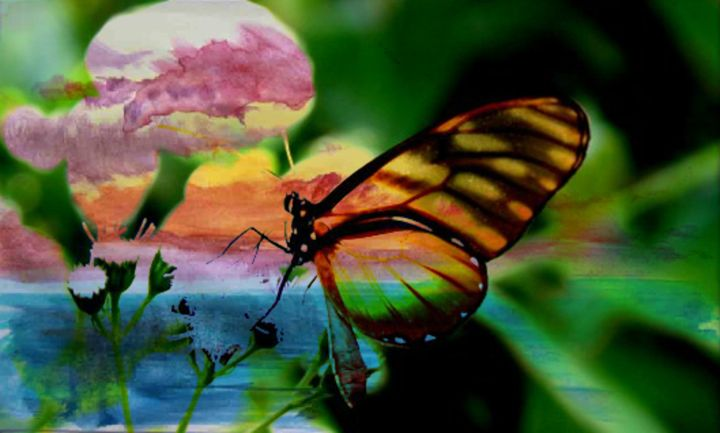 Butterfly Dreams - Pamela