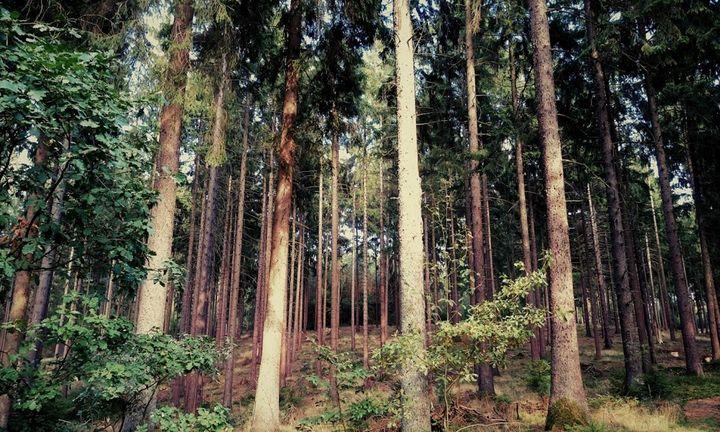 Klecker Waldweg - Peter Norden