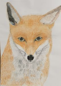 The foxs eyes by S.M.Croucher