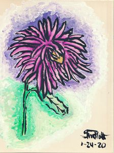Seasonal Blooms: Aster