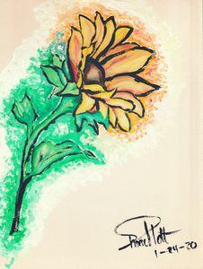 Seasonal Blooms: Sunflower