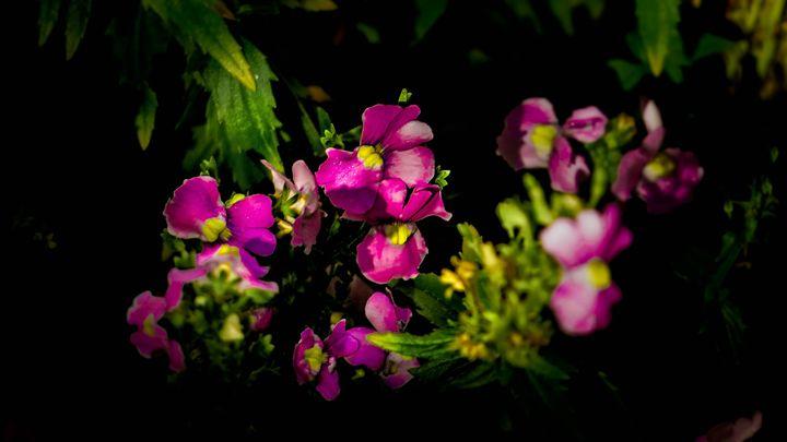flowers - teodoramotateanu