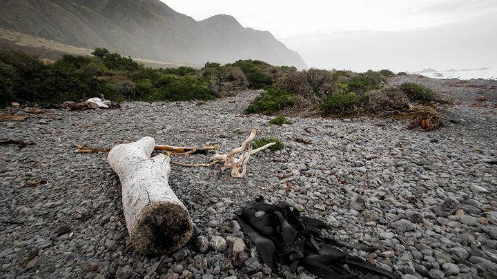 Wild beach - teodoramotateanu