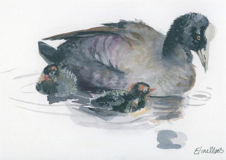 Coot (Meerkoet) - ElineMoos