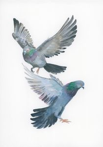 doves or pigeons?