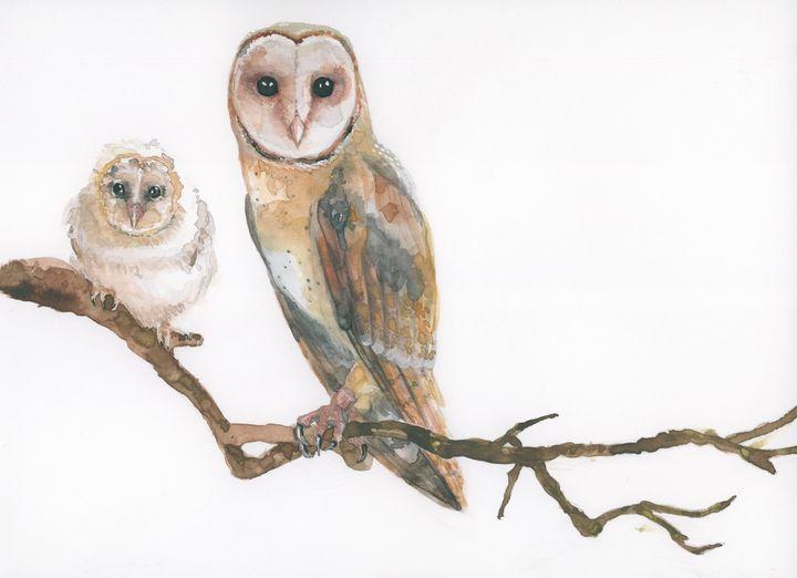 Barn Owl - ElineMoos
