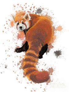 Red Panda #1