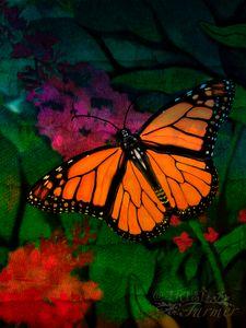 Monarch Butterfly #1WC