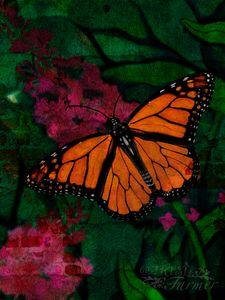Monarch Butterfly #1-BWC