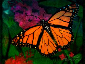 Monarch Butterfly #1- cropped