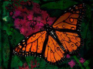 Monarch Butterfly #1-RD