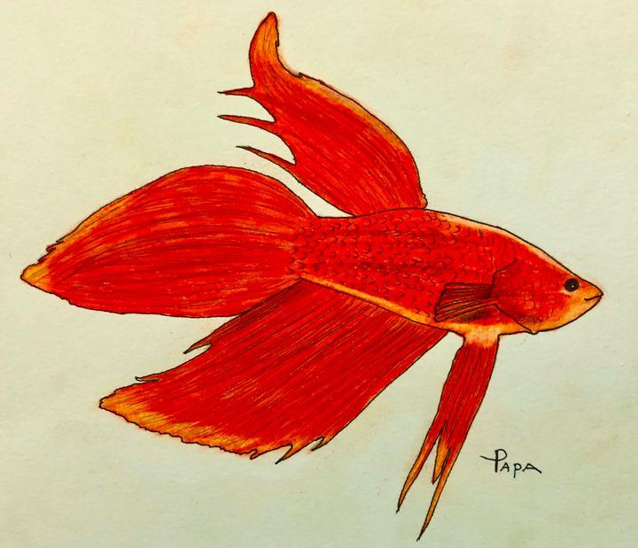 Veil tail betta fish - Art by Sam Papa