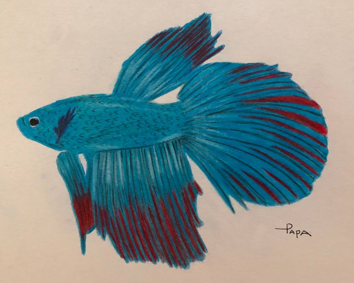 Delta tail betta fish - Art by Sam Papa