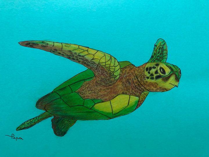 Sea turtle - Art by Sam Papa