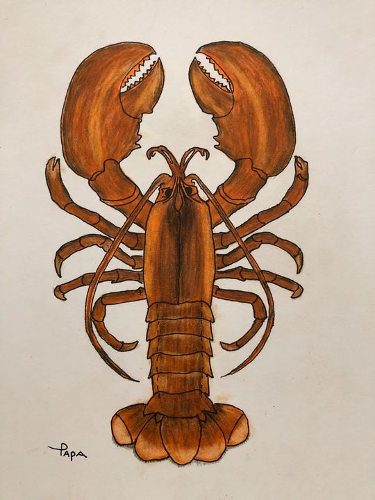 Cold water lobster - Art by Sam Papa