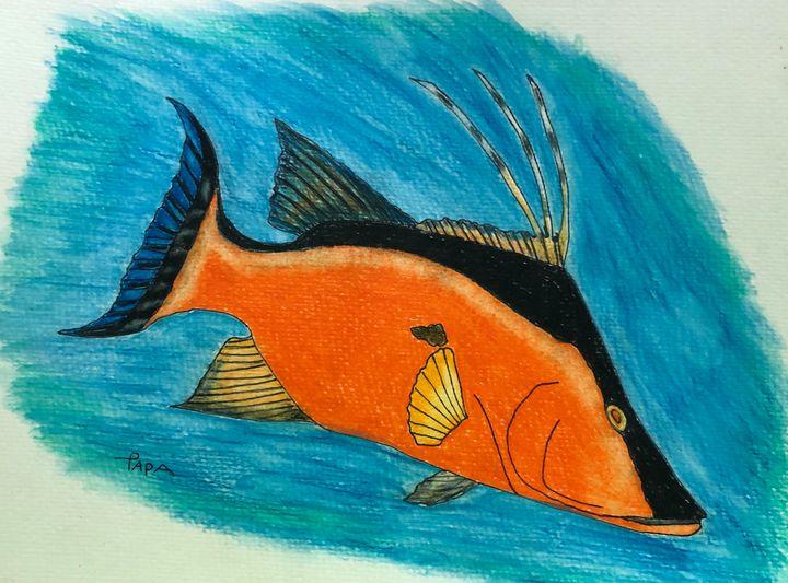 Hog fish - Art by Sam Papa
