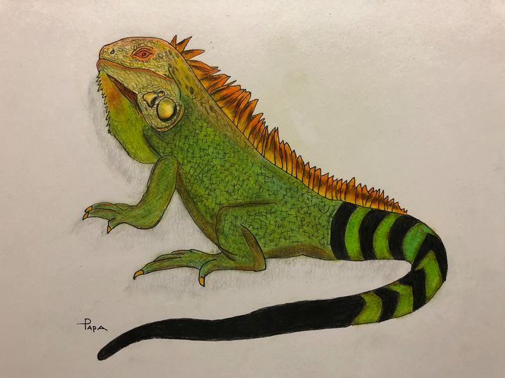 Iguana - Art by Sam Papa