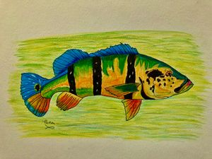 Florida Peacock Bass