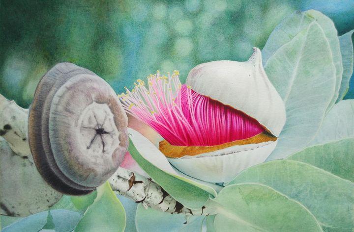 Close up of an Eucalyptus macrocarpa - Chris'Art