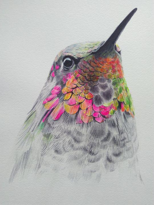 Anna's hummingbird - Chris'Art