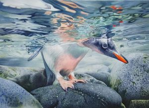 Cautious gentoo penguin