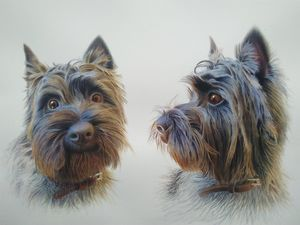 Charles, the cairn terrier