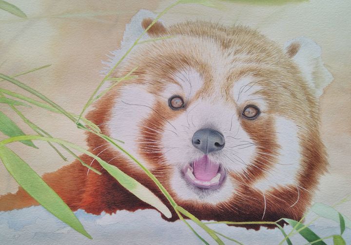 Red panda - Chris'Art