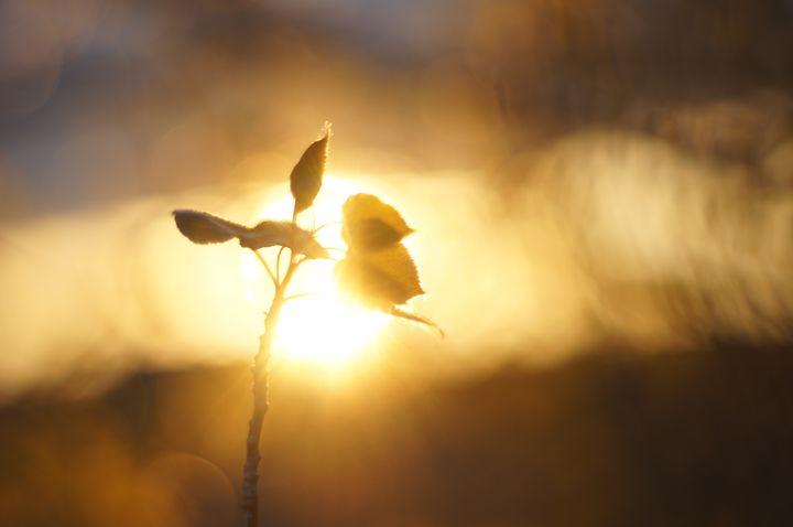 Light of Life - J.D. Hamblin Photography