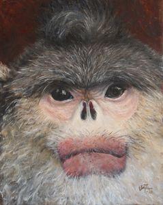 Black Snub-Nosed Monkey