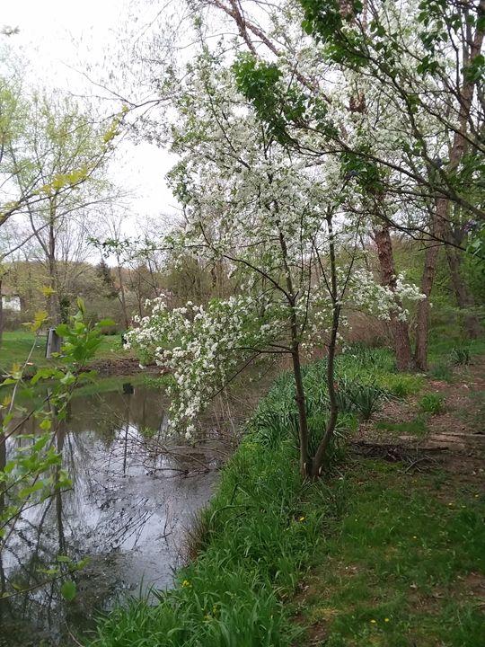 tree by pond - Bunni's Originals