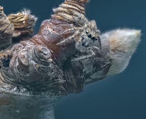 Macro photograph of jumping spider - hendrikspix