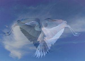 Herons' Heart