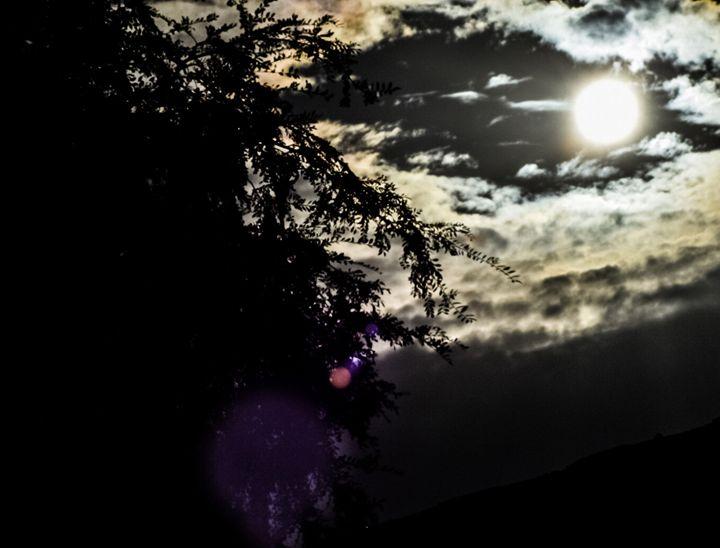 Dark Days - Championship Photography