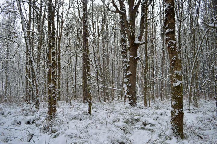 Snowy Woods - Gus's Art