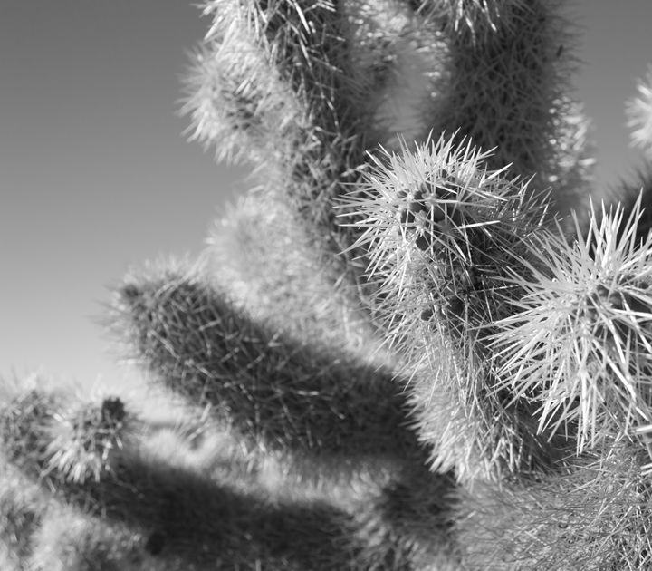 Cactus no. 2 - Gus's Art